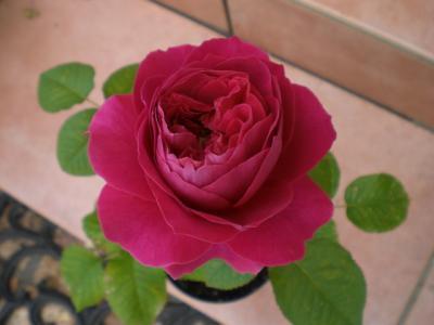 2012_0601_120426-CIMG4295.jpg