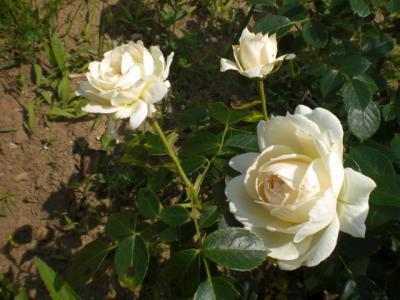 2012_0601_121114-CIMG4312.jpg