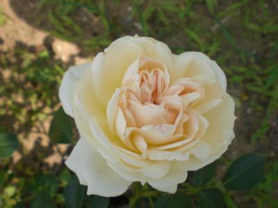 2012_0601_121140-CIMG4314.jpg