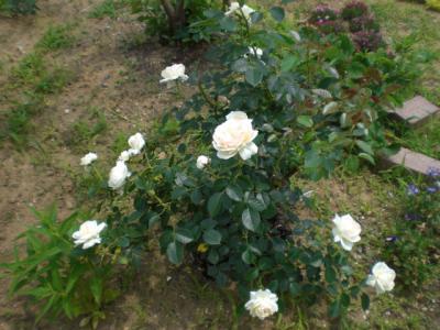 2012_0601_121222-CIMG4317.jpg