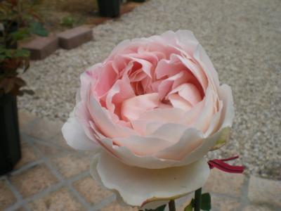 2012_0603_122150-CIMG4336.jpg