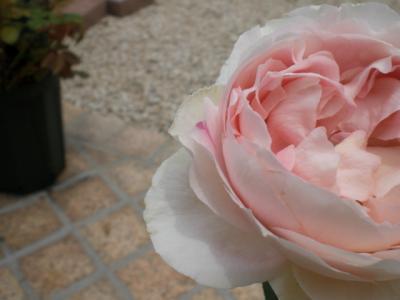 2012_0603_122203-CIMG4337.jpg