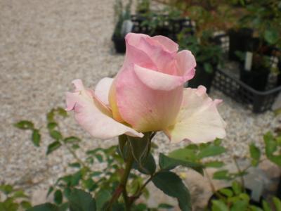2012_0603_122311-CIMG4342.jpg