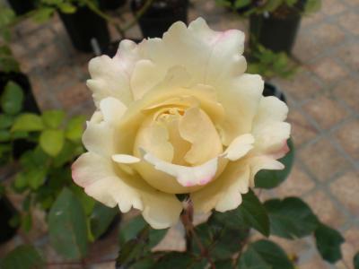 2012_0603_122403-CIMG4346.jpg