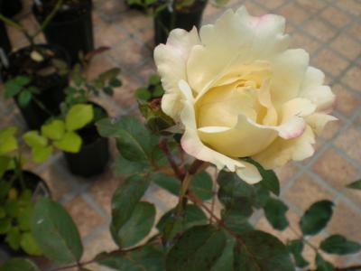 2012_0603_122436-CIMG4348.jpg
