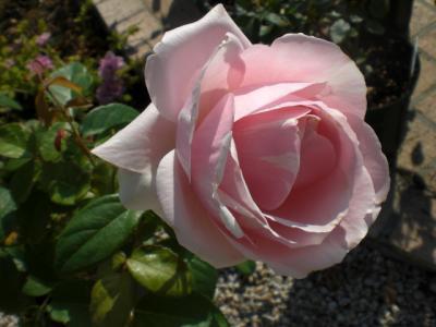 2012_0604_074628-CIMG4375.jpg