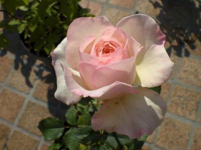 2012_0604_074759-CIMG4383.jpg