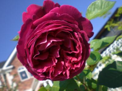 2012_0604_075002-CIMG4391.jpg