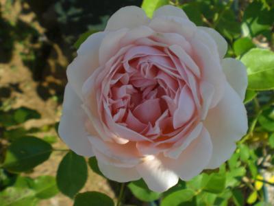 2012_0604_075051-CIMG4395.jpg