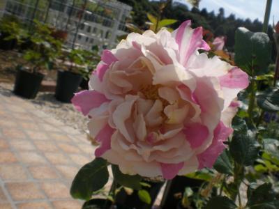 2012_0607_093825-CIMG4432.jpg
