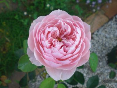 2012_0630_171304-CIMG4579.jpg