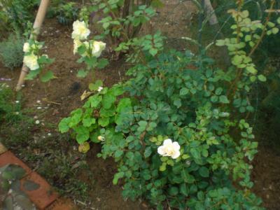 2012_0707_122543-CIMG4642.jpg