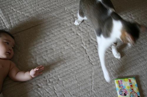 おもちゃの取り合い3