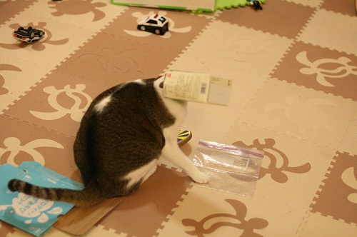 かご猫ならぬ箱猫
