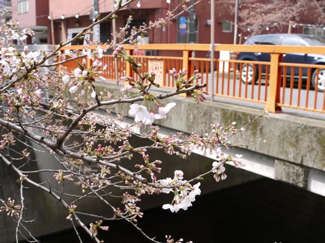sakura2010.jpg