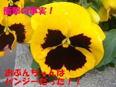 20100408b.jpg
