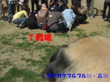 20100511f.jpg