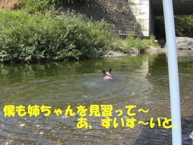 20100901f.jpg