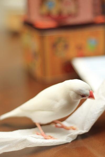 nnn koreha sirono tameno tishuu (1)