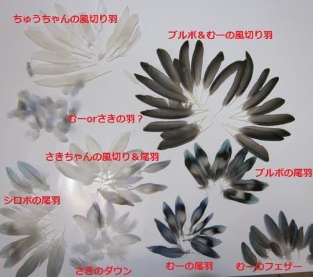 IMG_1656+-+繧ウ繝斐・_convert_20130128125549