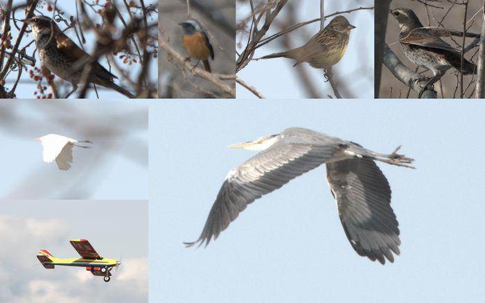 12-2-14-1木曽川に住んでいる鳥たち
