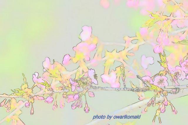 12-3-20-1万葉公園内の河津桜