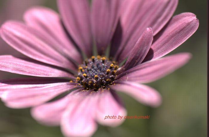 12-5-12-1庭先の花