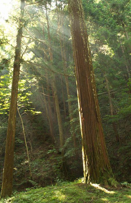 12-7-27-1醒井渓谷での陽が射す