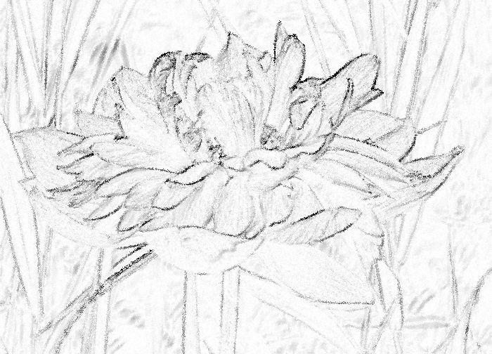 12-8-1-3鉛筆画
