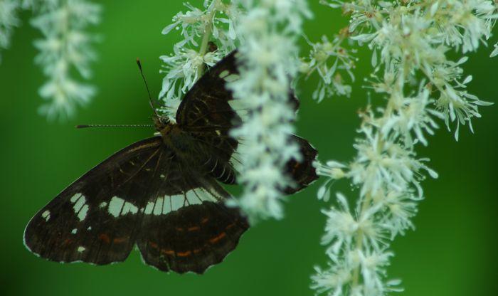 12-8-4-10蝶々