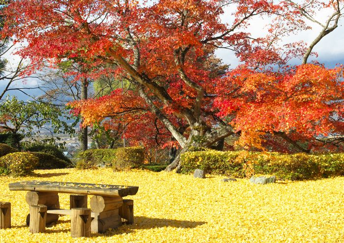 12-11-13-7長福寺の銀杏とカエデ