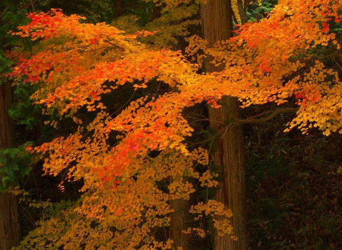 12-11-17-3八幡神社