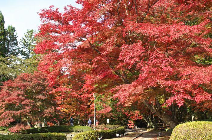 12-11-18-1曾木公園