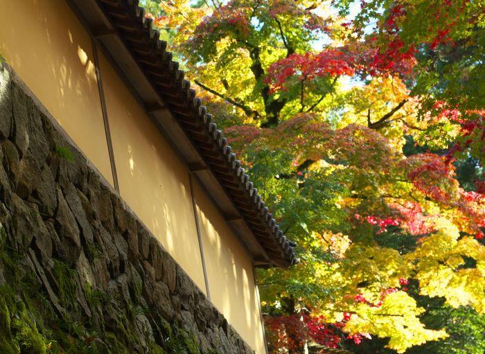 12-11-21-1西明寺