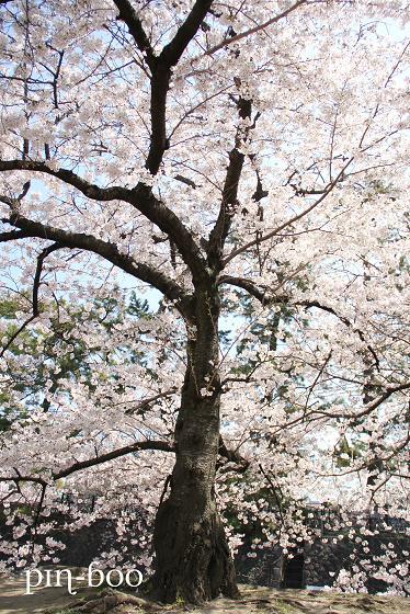 4.11夙川3