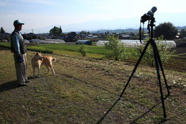 金冠日食秋田犬
