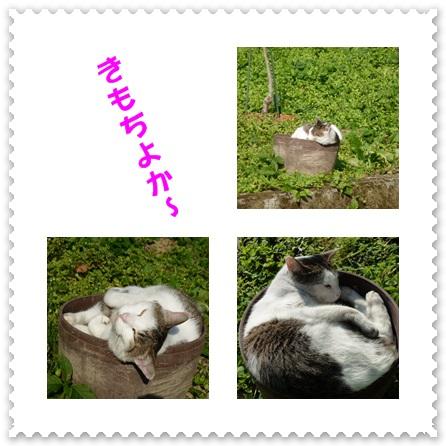 sakuradoncats.jpg