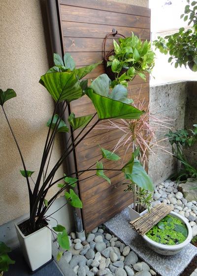 千草 玄関植物