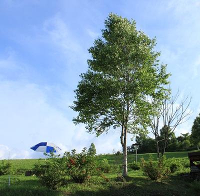 landcafe 木