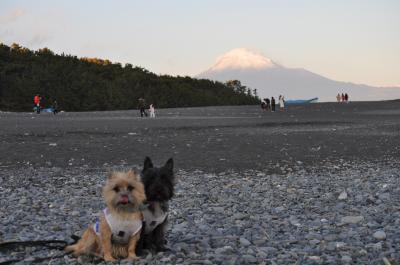 富士山とクーチップ