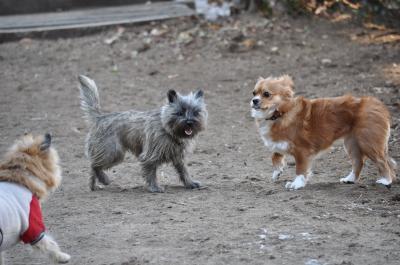 ルーシーちゃんとMIX犬