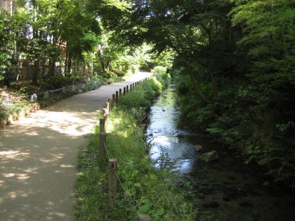 帷子川親水緑道