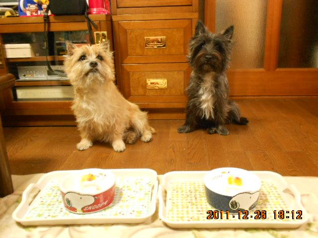ケーキ 待て!2
