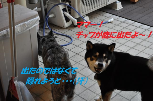 DSC_0242_convert_20130223084700.jpg