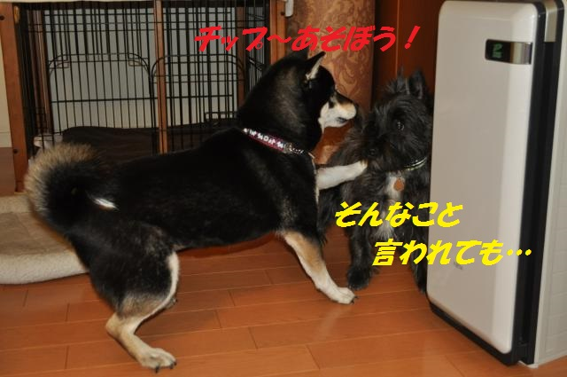 DSC_0248_convert_20130223085137.jpg