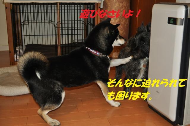 DSC_0249_convert_20130223085236.jpg