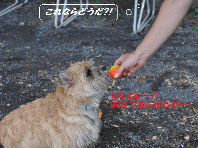 SSC_0440_20120918183621.jpg