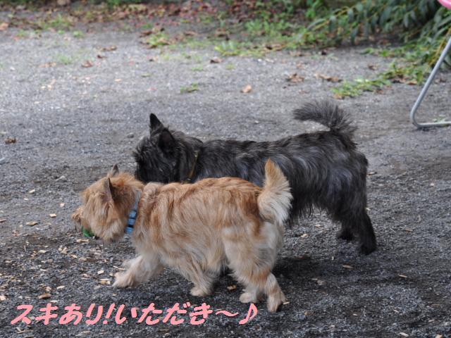 SSC_0447_20120919205215.jpg