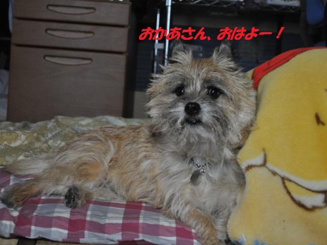 SSC_1049_20130321222109.jpg