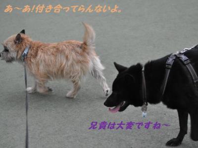 SSC_1300_20121012213806.jpg